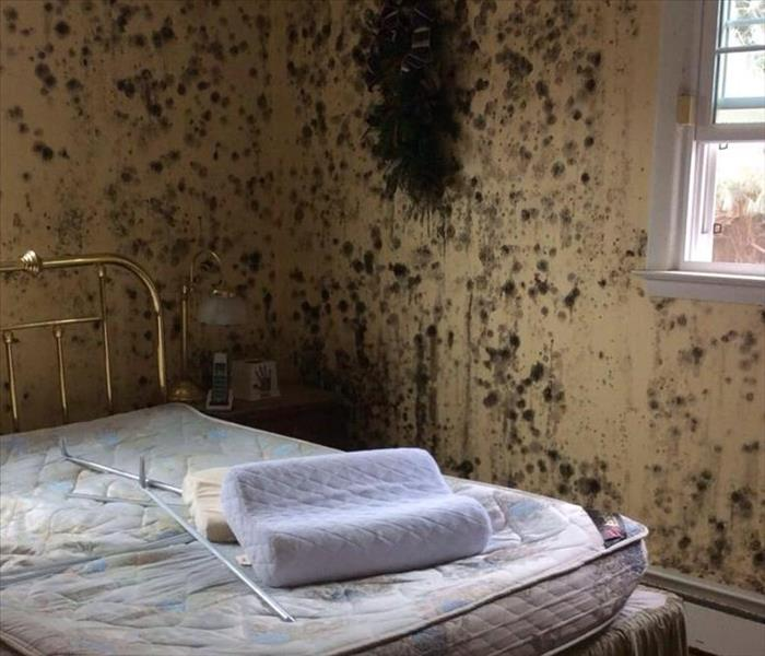Extensive Mold Damage- Required Remediation Before