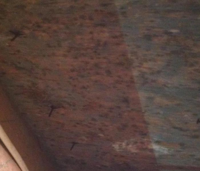 Mold Remediation Mold Found in Severna Park Home