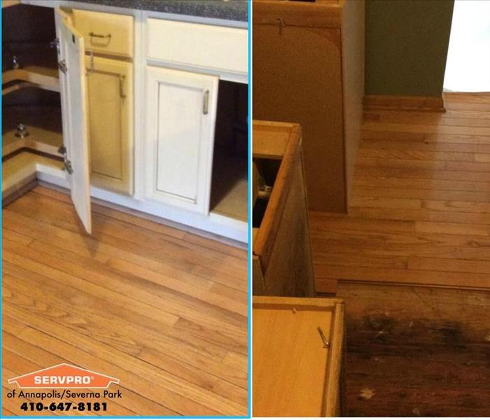 Mold Remediation Mold Madness in Severna Park