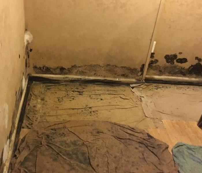 Mold Remediation House Overcome With Mold