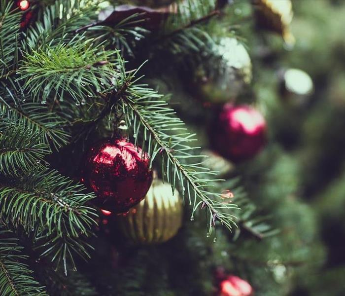 Fire Damage Tips to avoid Christmas Tree Fires in Annapolis