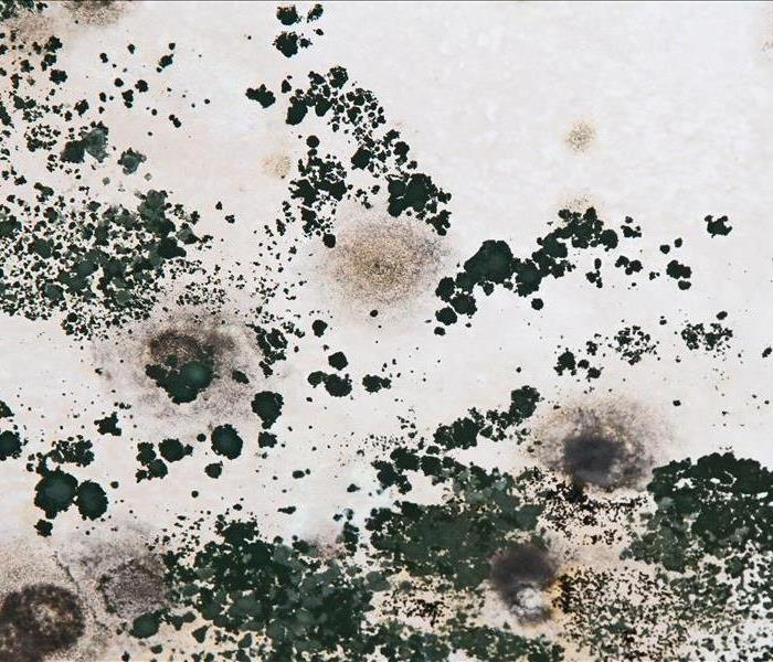 Mold Remediation Does Your Annapolis Home Have A Mold Problem?